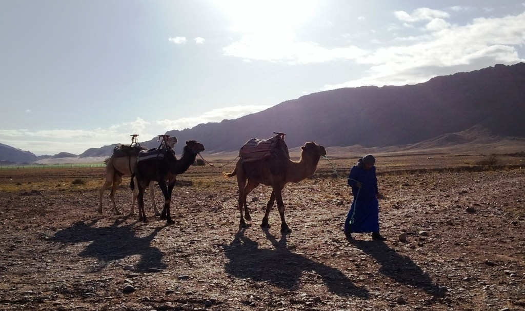 Camellos en desierto de Zagora
