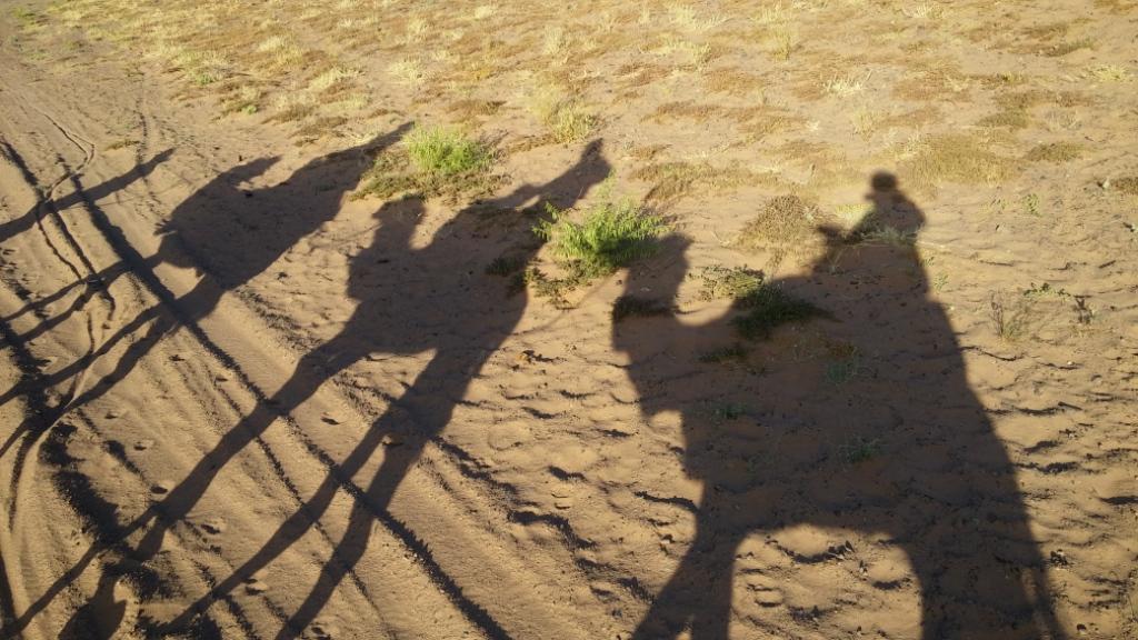 Camellos desierto Zagora