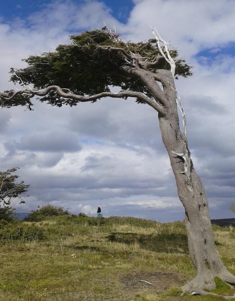 Árboles en Tierra del Fuego