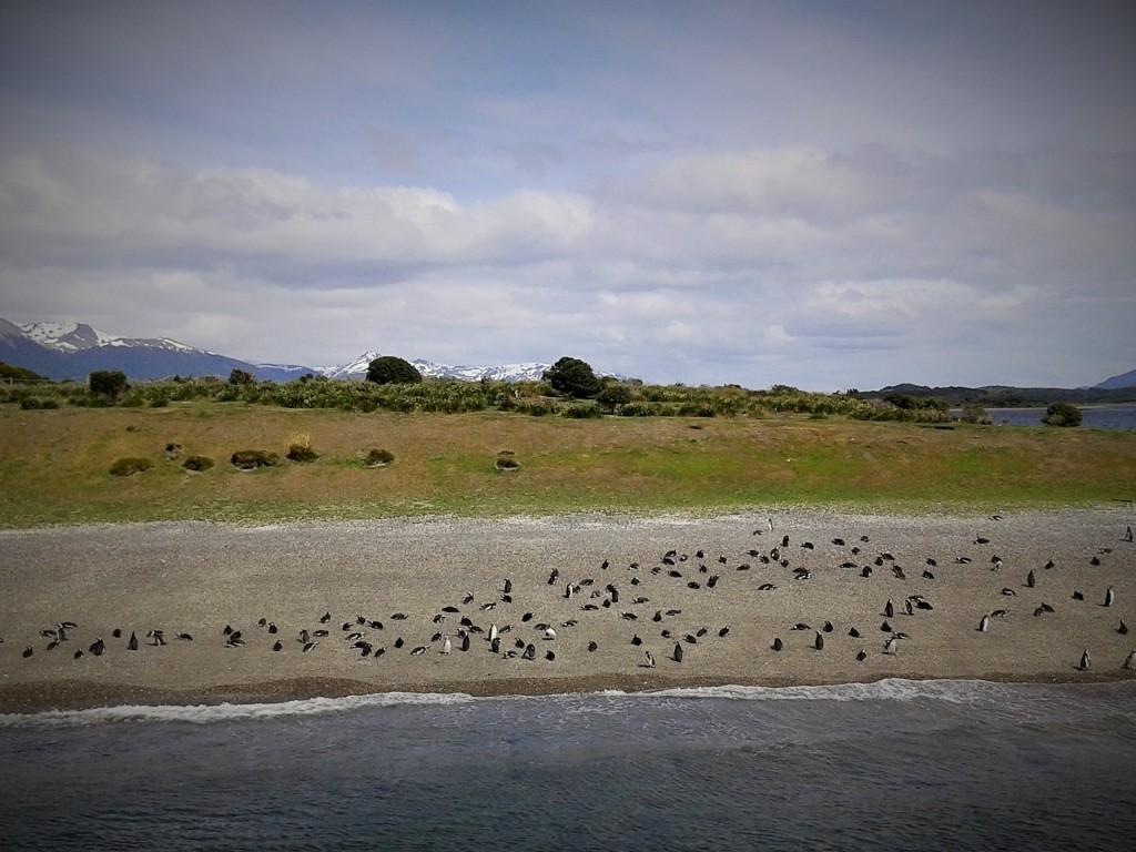 Isla con pingüinos en el Canal de Beagle