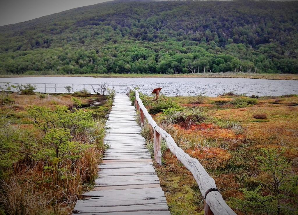 Turberas, Parque Nacional de Tierra del Fuego, Argentina, noviembre 2014 - viajarcaminando.org