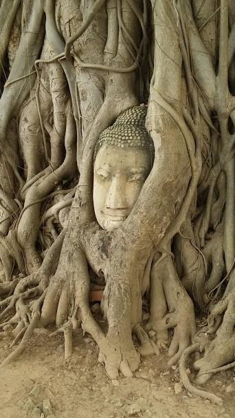 Cara de Buda dentro de un árbol, Ayutaya, Tailandia, 2015