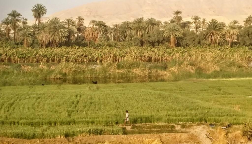 Desierto y palmers a orillas del río Nilo, cerca de Luxor, Egipto, marzo 2016 | viajarcaminando.org
