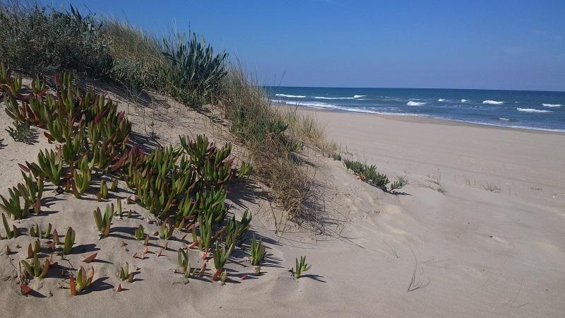 Dunas de Playa del Rey, Mareny de Barraquetes, Valencia, España, marzo 2016