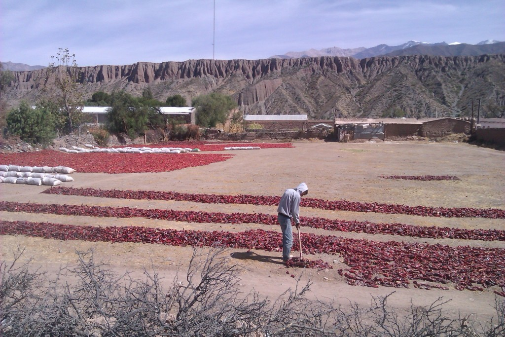 Cultivo de ajíes rojos, provincia de Salta, Argentina, abril 2013 | viajarcaminando.org