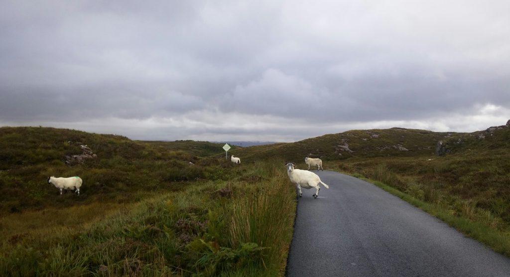 Camino al Castillo de Brochel, Isla de Raasay, Escocia, agosto 2016 | viajarcaminando.org